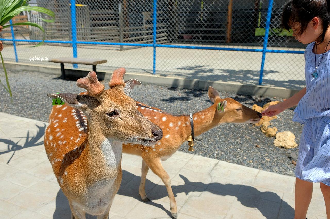 屏東恆春︱墾草趣草食生態園區.不只有梅花鹿,還有草泥馬、麝香豬、山羊、兔子、天竺鼠,墾丁親子景點推薦 @QQ的懶骨頭
